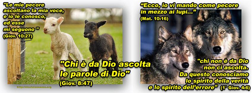 pecore-lupi-matteo-10,16